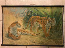 Original vintage zoological pull down school chart of Tigers