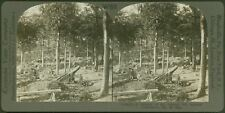 Battery of the Famous 270 Mortars (Howitzers) Mont-Saint-Éloi  - WW1 Stereoview