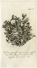 Antique Print-MOSS-PLANT-Martinet-1779