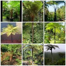 Tree Fern ultimate collection seed spores!8 types! 200+seeds! Inc Largest fern!