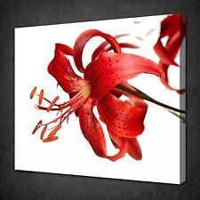 STUNNING RED TIGER LILY FLOWER CANVAS WALL ART PICTURE PRINT READY TO HANG