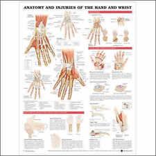 Injuries of Hand & Wrist Anatomical Chart/Charts/Model