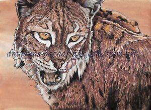 "SFA Original Art 8x11"" Animal Cat Lynx Realism Ink Drawing Painting - SMcNeill"