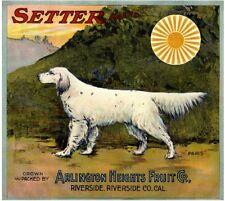 Riverside White English Setter Dog Orange Citrus Fruit Crate Label Art Print