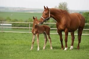 3,99€/kg 10kg DSV Country Horse 2118 Nachsaat Pferdeweide Saatgut