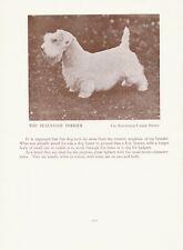 SEALYHAM TERRIER OLD VINTAGE 1934 NAMED DOG PRINT PAGE