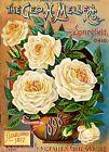 1898 Mellen Rose Vintage Flowers Seed Packet Catalogue Advertisement Poster