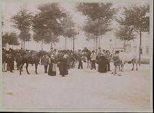 QUIMPER c. 1900 - Marché Chevaux - Finistère Bretagne - 274