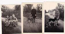 Three Vintage Photos - Little Girls - Alsatian / German Shepherd Dog, Children