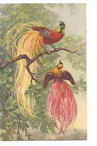 ILLUSTRATION OISEAUX , BIRDS
