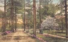 Southern Pines North Carolina Vermont Avenue Scenic View Postcard J50056