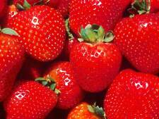 PHOTO FRUIT STRAWBERRY RED JUICY FOOD POSTER ART PRINT PICTURE BB277A