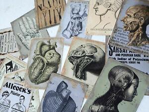50 Vintage Anatomy Skull Skeleton Doctor Medical Student Nurse Junk Journal Card