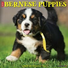 Just Bernese Mountain Puppies 2022 Wall Calendar (Dog Breed) (Free Shipping)