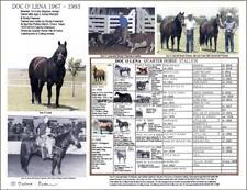 "8.5 X 11""Quarter Horse Cutter Icon Doc O' Lena Photo Picture Pedigree"