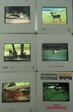 Lot of 6 Original Vintage 35mm Kodak Photo Color Slides Animals Kodachrome