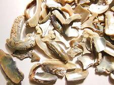 Abalone Shell Chunks -6 ounces