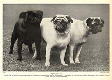 1930s Antique Pug Dog Print Anne Pretty Polly & G. Eyes of Bitchet Pug 3703-M