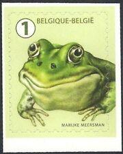 Belgium 2020 - Fauna - Garden Visitors - Green frog