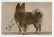 1930s Lovely Dog FINNISH SPITZ / Pomeranian ? British vintage photo postcard