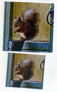 3 RED SQUIRREL NOTELETS & 3 GIFT NOTELETS WITH GREEN & WHITE ENVELOPES