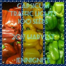 CAPSICUM 'Traffic Lights' 100 seeds min.RED/ORANGE/GREEN/YELLOW ☆2017 HARVEST☆
