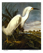 Audubon Snowy Egret 30x44 Hand Numbered Edition Art Print Birds