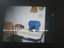 Vtg 2000 Photo of Hungry Black&White Green Eyed Cat In Baby's High Chair D76