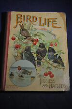 1901 Bird Life Their Homes and Habits