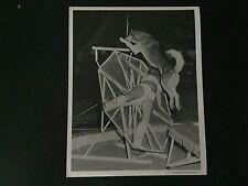 RARE VINTAGE CIRCUS ACT: Husky Dog with Trainer Acrobat Photo