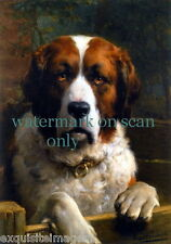 c1900 Art~Handsome St. Bernard Dog Dogs~Puppy~Puppies~Profil e New Lge Note Cards