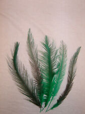 5 Schwarz + Grüne Federn, (Wutur) 32 - 38 cm lang