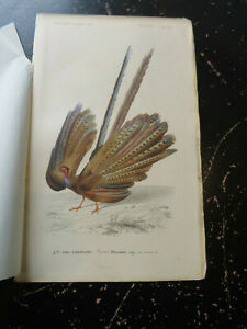 Argus Pheasant - D' Orbigny D' Histoire Naturelle, published Paris ca:1840