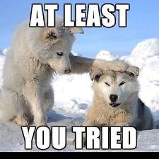 "Funny Siberian Husky refrigerator magnet 3 1/2x 3 1/2"""