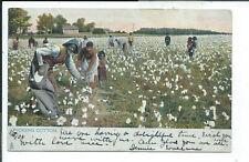 Postcard Black Americana Tuck Cotton Picking