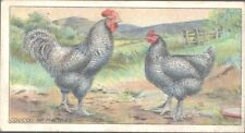 Ogdens - Poultry, 2nd Series - 28 - Coucou of Malines