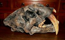 Smilodon skull -Museum quality.( Sabre tooth)