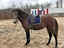 20 pounds All Purpose Fresh Horse Manure Organic Gardening Fertilizer Flower Pot