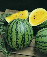 BABY DOLL YELLOW WATERMELON SEEDS * BRIGHT YELLOW INTERIOR* EXTRA SWEET* COMPACT
