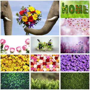 Colourful Flower Wall Background Prints Photography Backdrop Cloth Daisy Rose