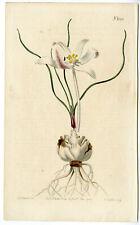 Antique Print-COLCHICUM AUTUMNALE-MEADOW SAFFRON-Edwards-Curtis-Sansom-1808