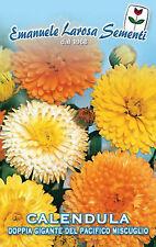 100 Semi/Seeds CALENDULA OFFICINALIS Pacific Beauty