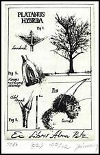 Janvary Zoltan C2 Exlibris Bookplate Platanus Hybrida Alma Petz Tree Baum s13