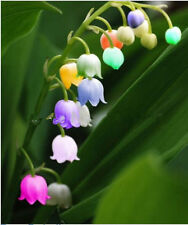 5  import bell orchid seeds, fragrant orchid all sorts of color of flowers