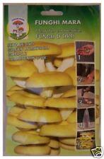 1 Conf. CHIODI DI MICELIO - Fungo D'Oro