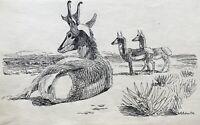 Karl Adser 1912-1995 Rehbock Rehe Frühlingstag Tierwelt Dänemark Natur