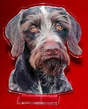 statuette photosculptée 10x15 cm chien drahthaar 1 dog hund perro cane