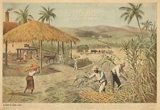 Original Vintage Poster Petit Journal France 1900 Sugar Cane Farming Slavery Art