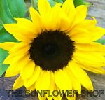 The Sunflower Shop (Solihull)