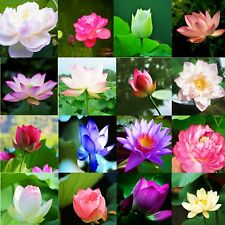 10pcs Bowl Lotus Water Lily Mix Flower Seeds Bonsai Pot Garden Plant Dwarf Trees